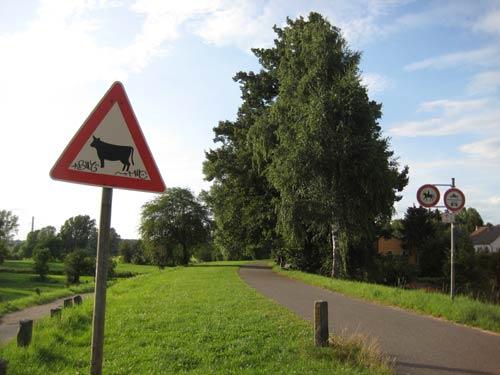Mit dem Fahrrad unterwegs am Rhein