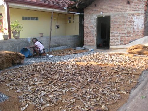 Herstellung von Trockenfisch / Laying out fish to dry