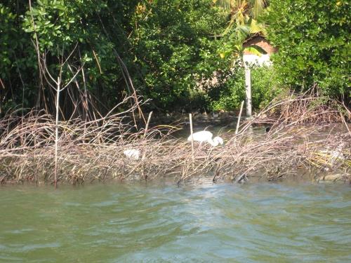 """Dieser """"Bau"""" aus Zweigen wird in der Lagune aufgestellt, damit Fische drin """"wohnen"""" und einfach abgefischt werden können / This contraption of branches is put up in the lagoon for fishes to live in - and subsequent easy fishing"""