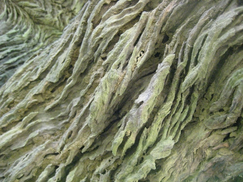 Rinde eines wunderbaren Baums / Bark of a beautiful tree