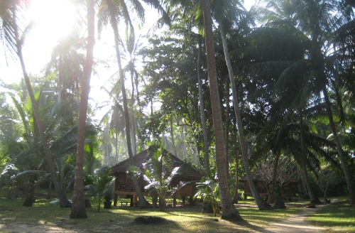 A Palm Paradise Cabana in the palm grove